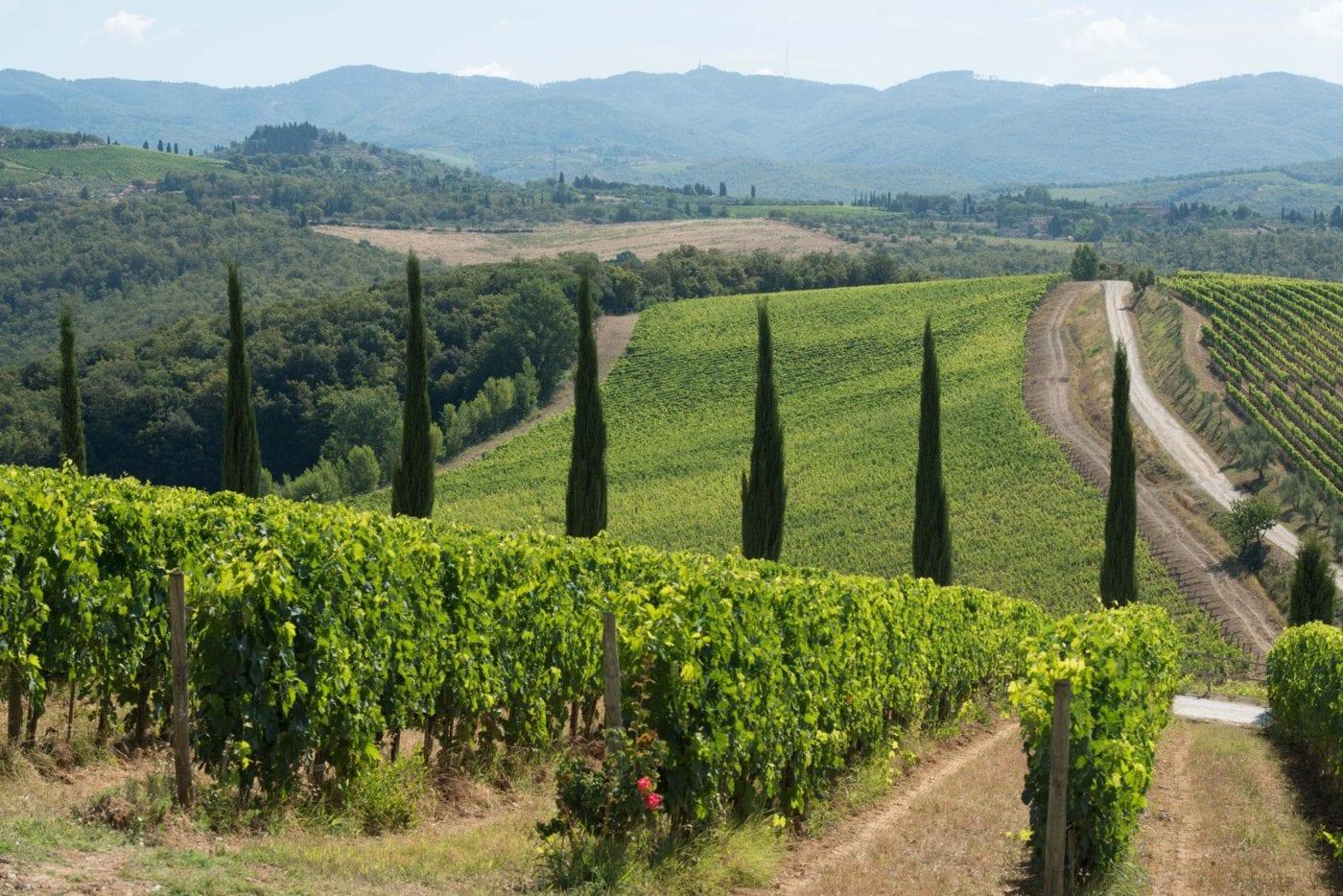Tuscan Love 49